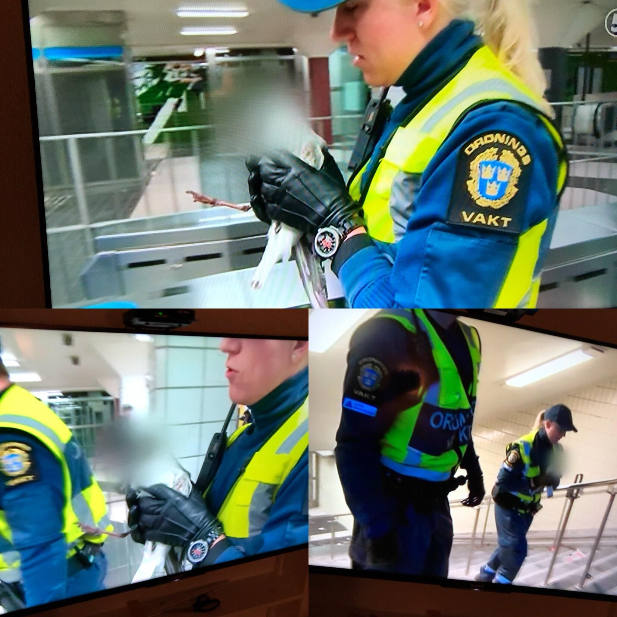 Swedish television channel decided to protect the identity of a seagull that was saved from the subway