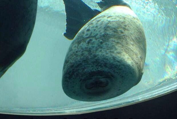 This is what happens when a seal runs into glass...