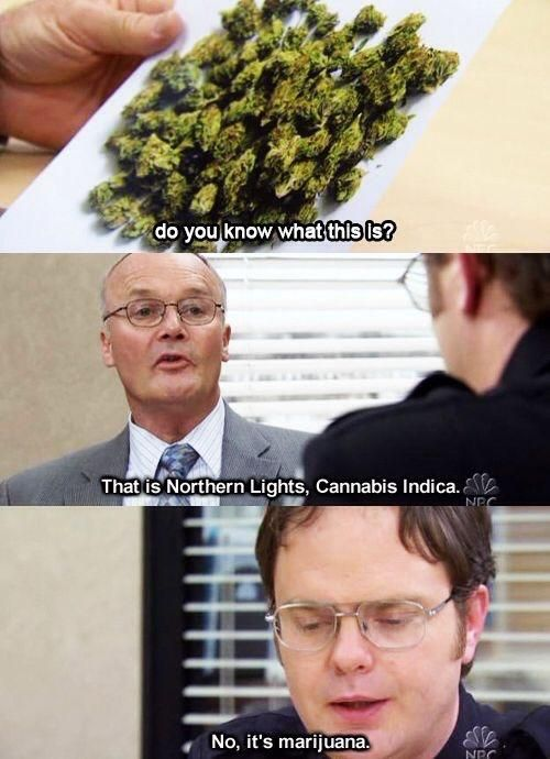 Rewatching The Office . Creed is such an underrated character.