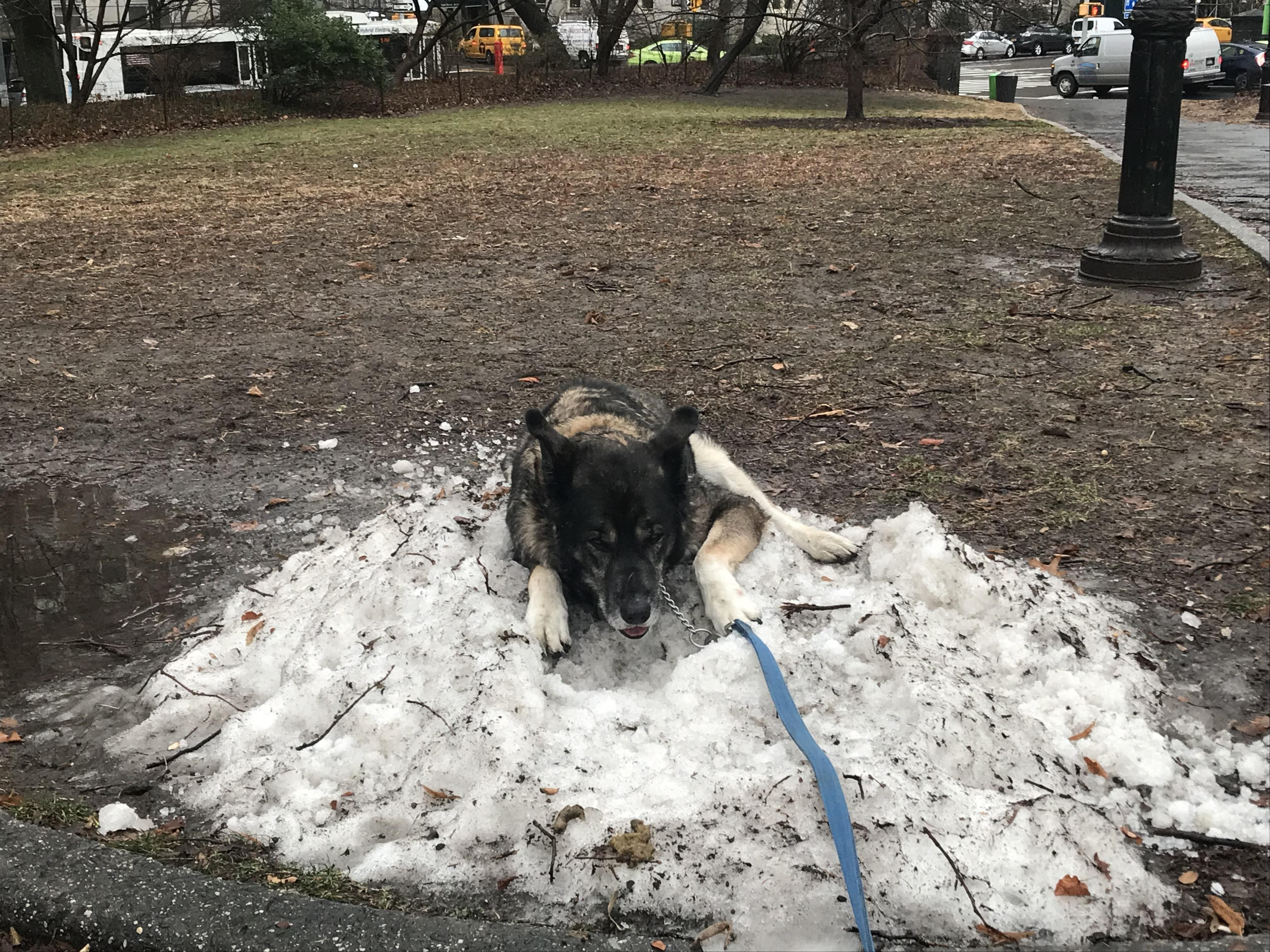 You could say my dog misses the snow