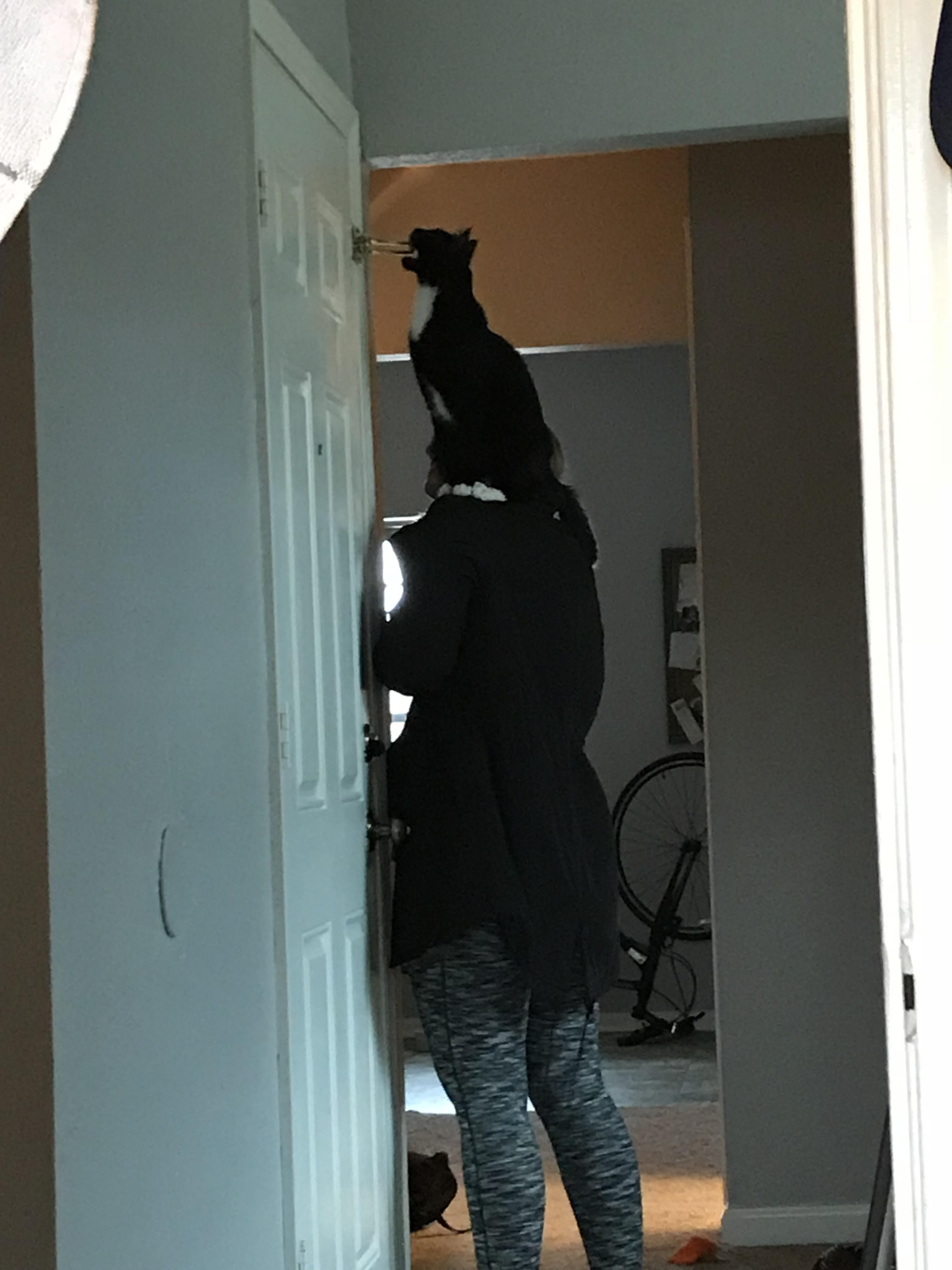 My girlfriend takes Zuko on shoulder expeditions through the house, so he can examine things in high places.