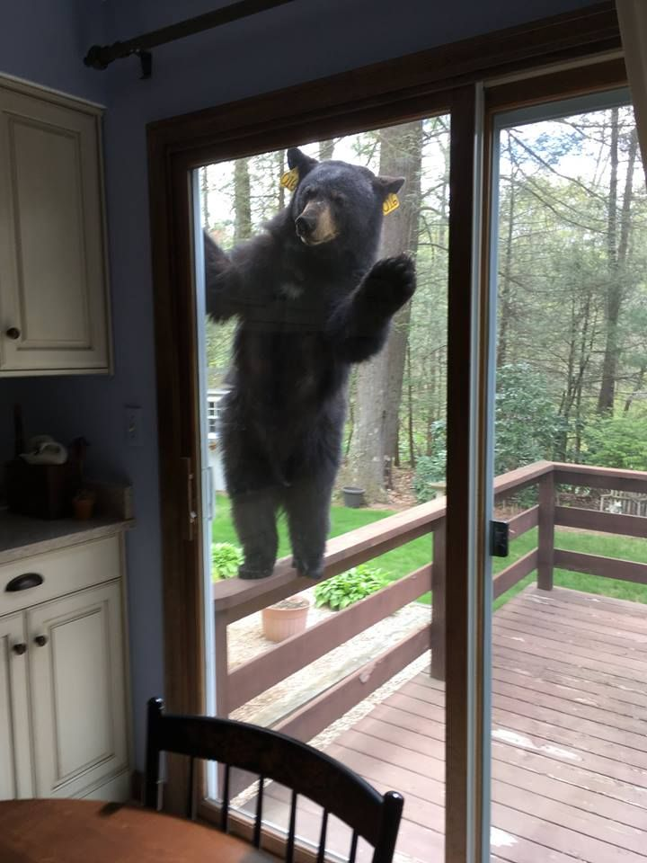 Do you have a moment to talk about our Lord and Savior Yogi the bear?