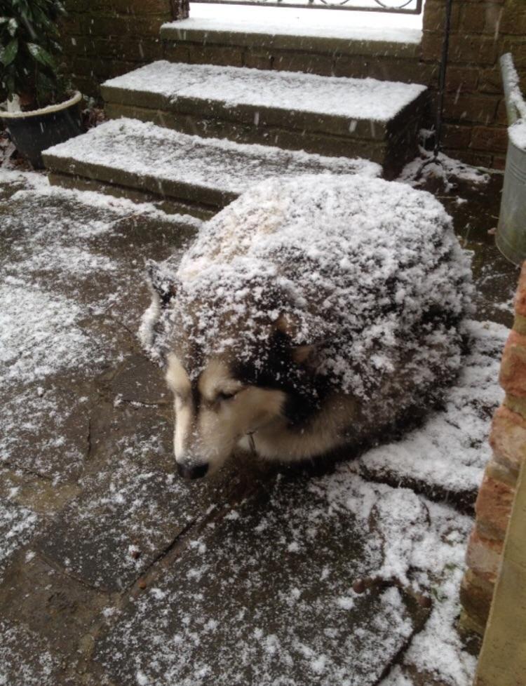 Dog or hedgehog?