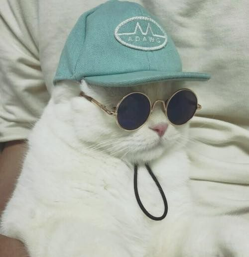 This is my friends cat, it's way cooler than I'll ever be and I've accepted that.