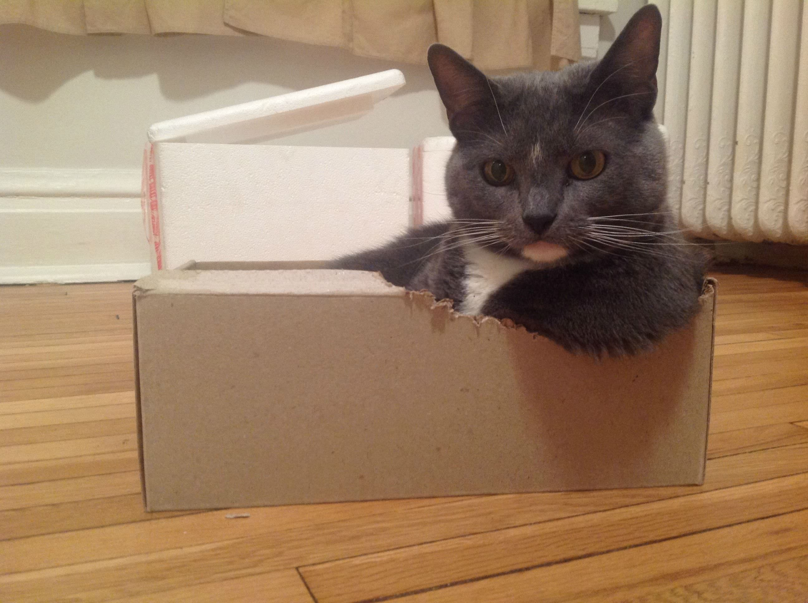 This cat chewed an armrest for herself in a box