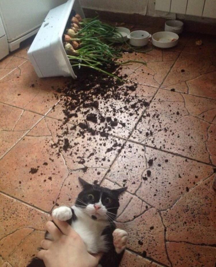 The joys of owning a cat.