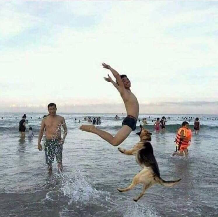 It was at that moment Dave realized that teaching his dog to catch frankfurters was a bad idea...