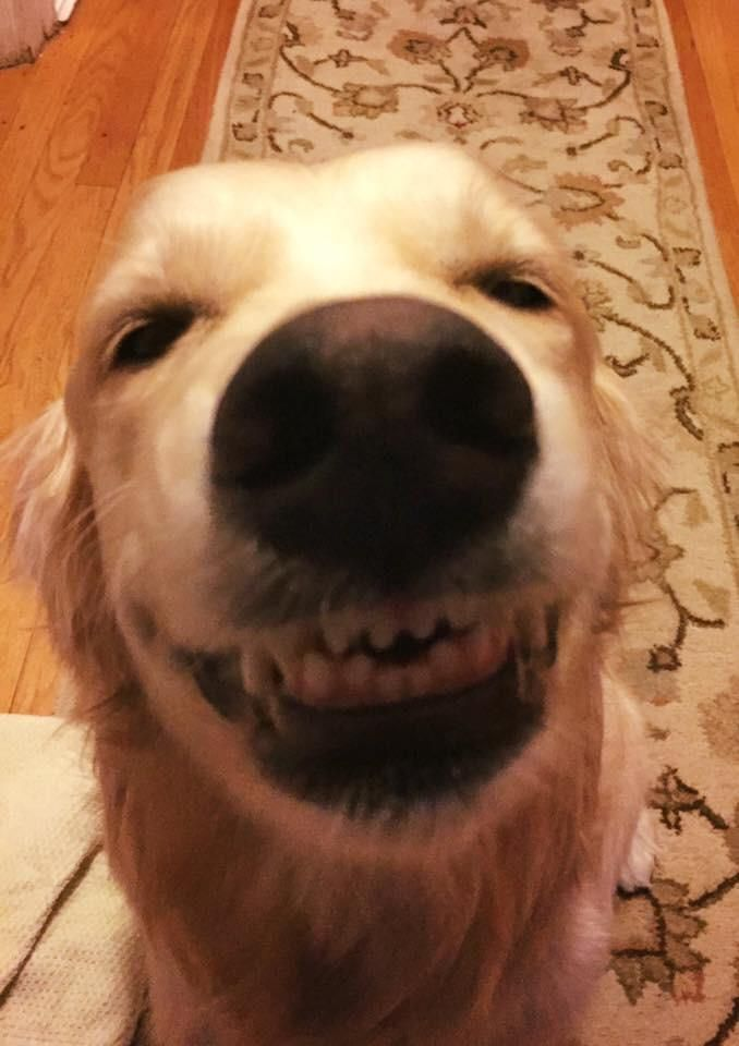 My dog welcoming me home from work. Best smile ever.