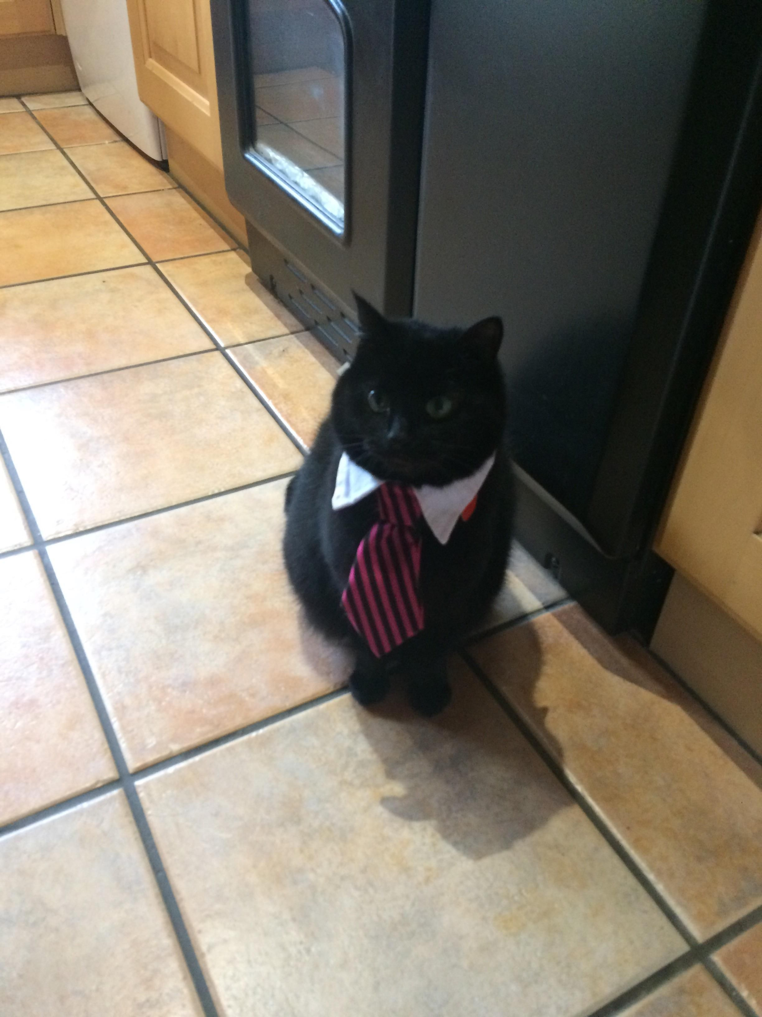 First job interview of the year...