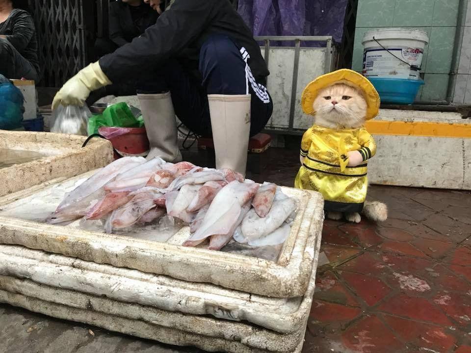 Surveying Fish market like..