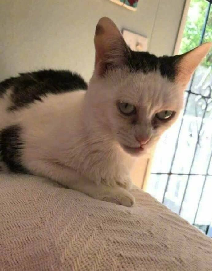 If Steve Buscemi was a cat