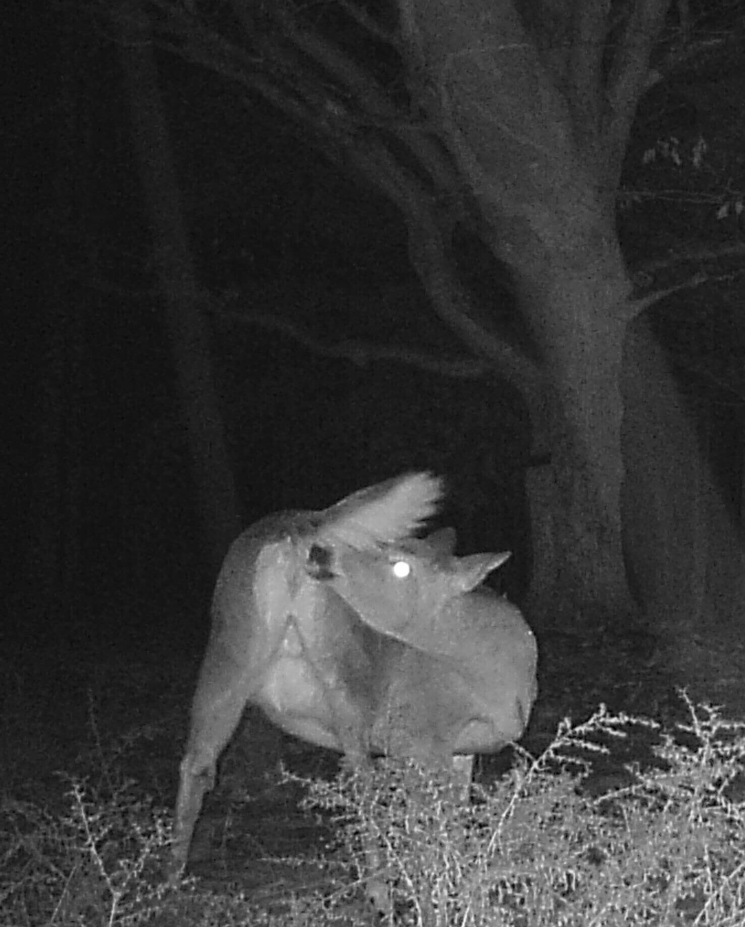 Had a good laugh browsing through my trail cam photos.