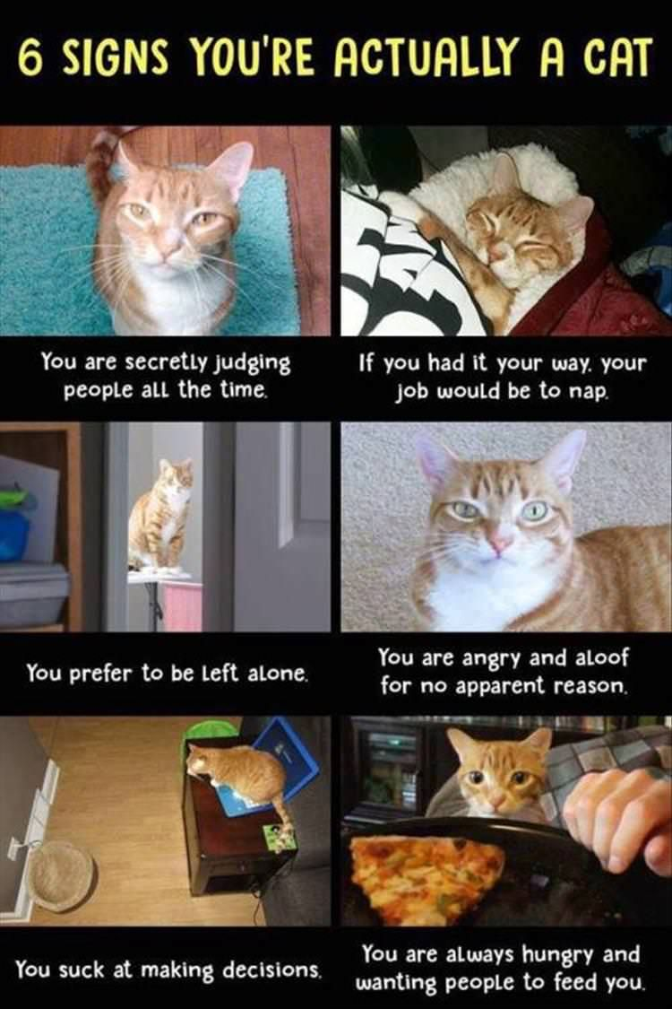 6 signs you're actually a cat