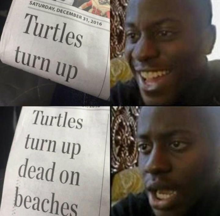 Turtles turn up