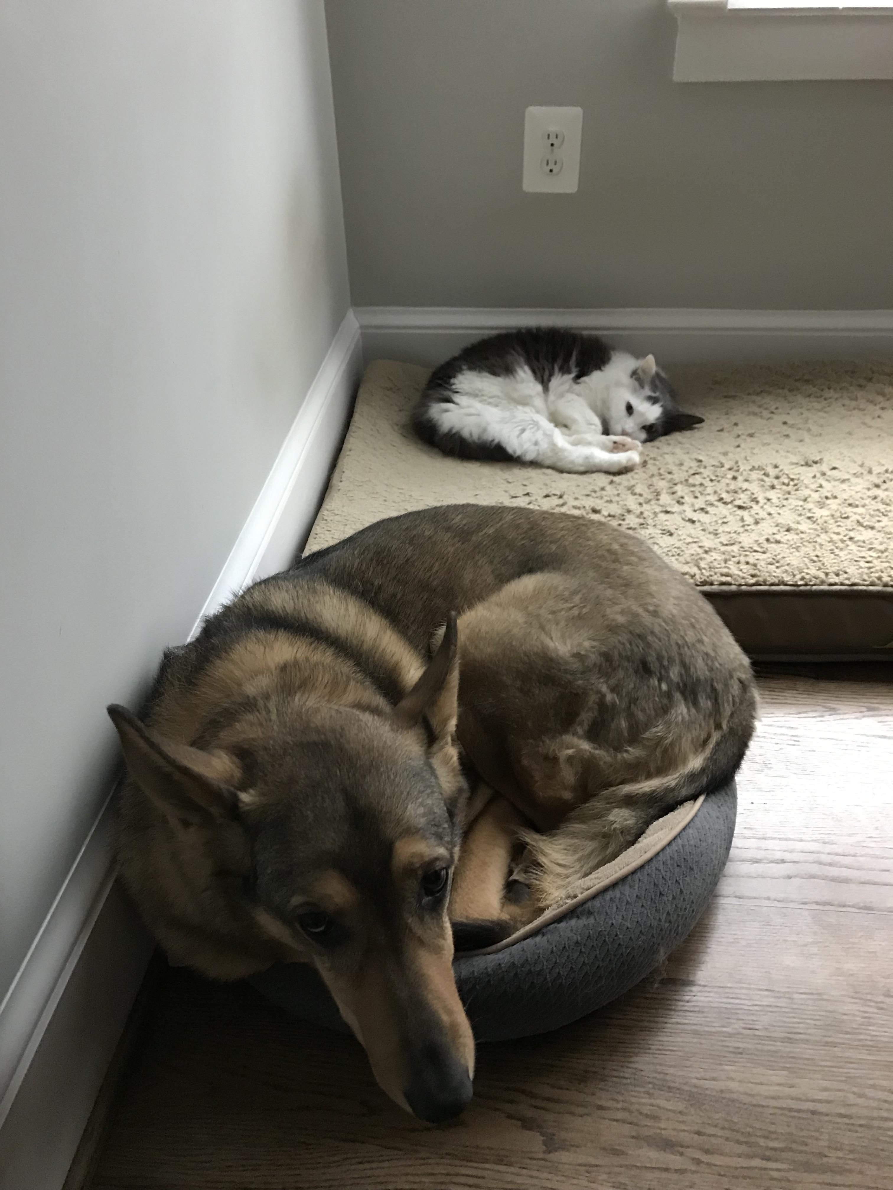 The cat is the alpha in this house.