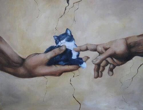 The hand of meow