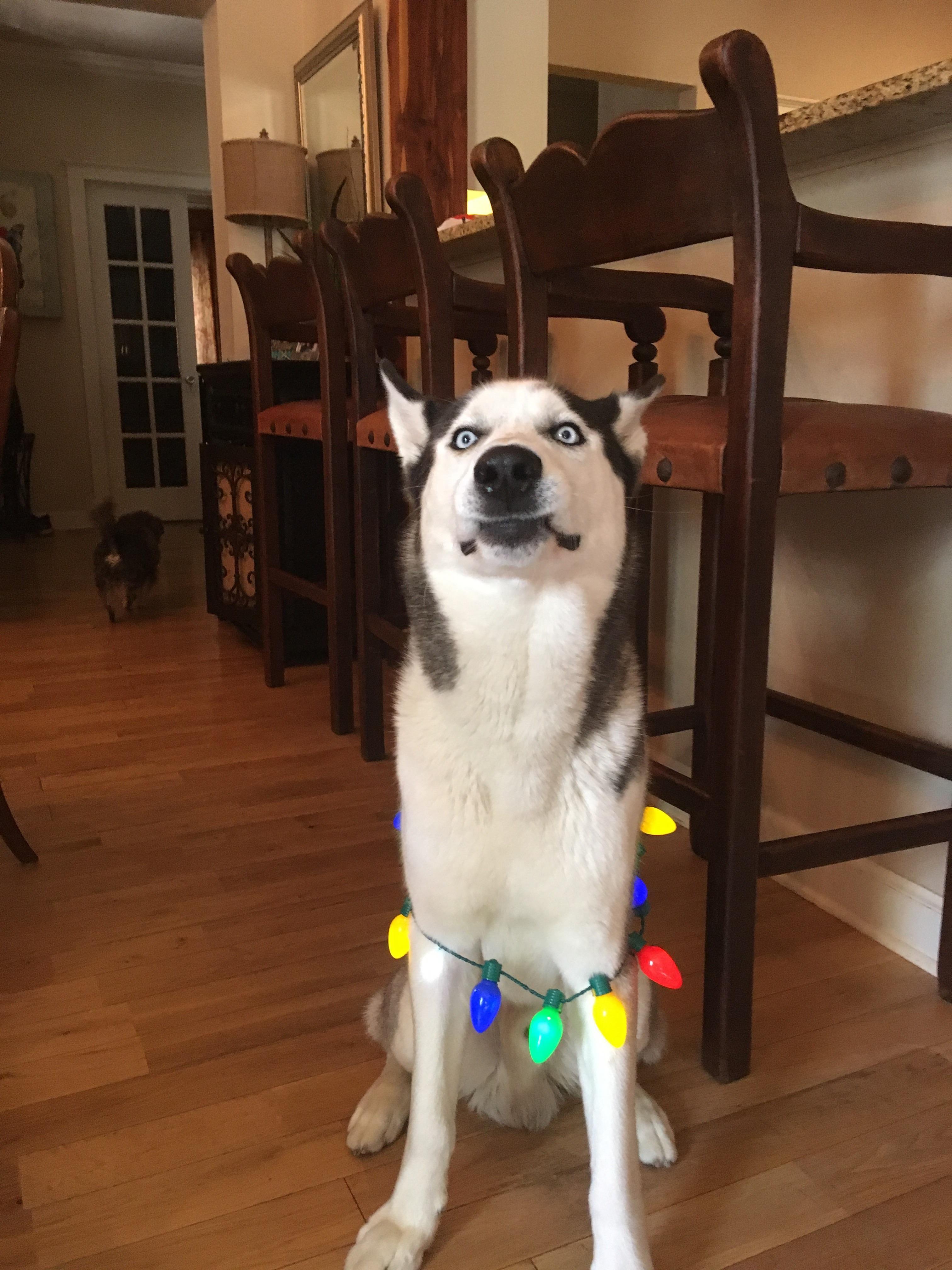 My dog pre sneeze