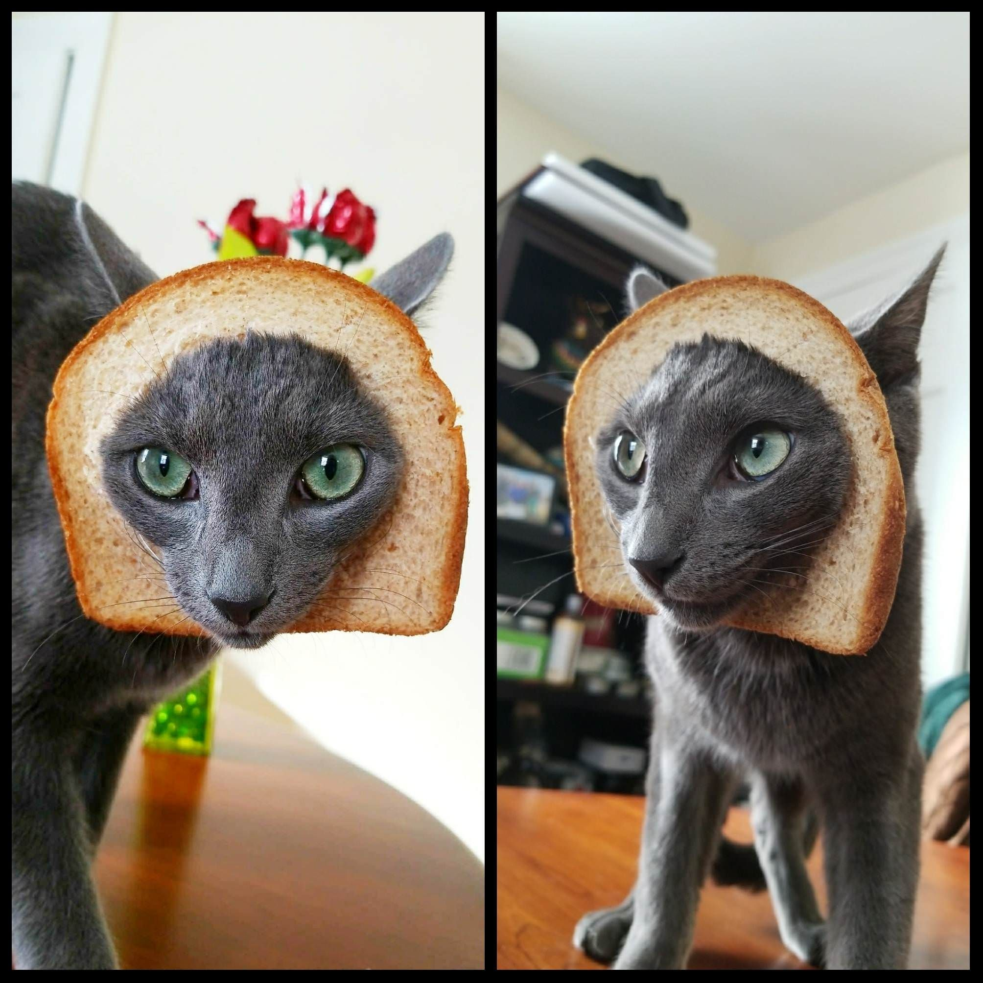 I suspect he may be inbred