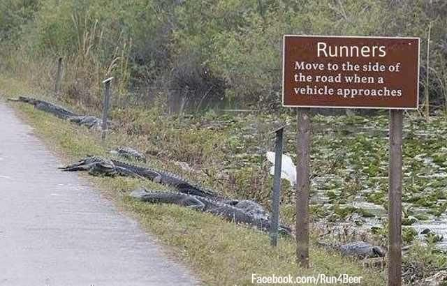 Meanwhile in Florida, alligators has learned how to make signs.