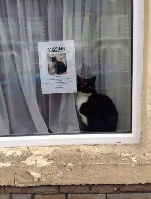 Missing cat spotted...next to its own missing cat poster