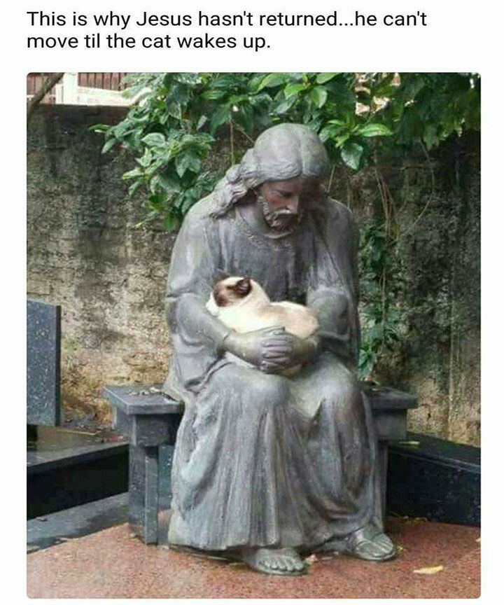 Cat in safe hands.