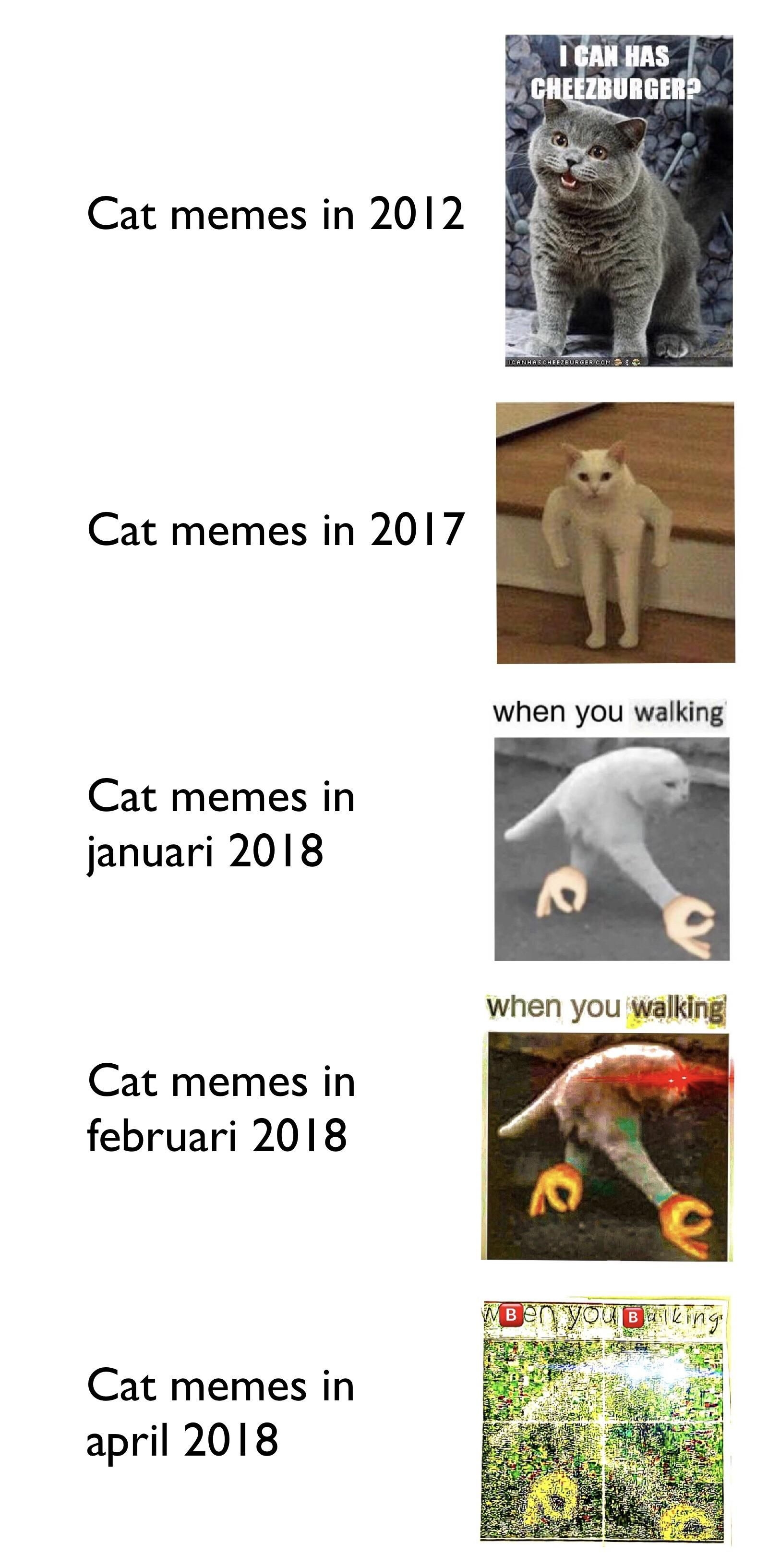Can't wait for the cat memes in 2019