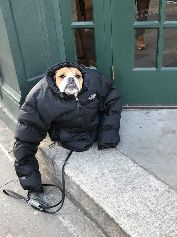 Do you even fetch, bro?