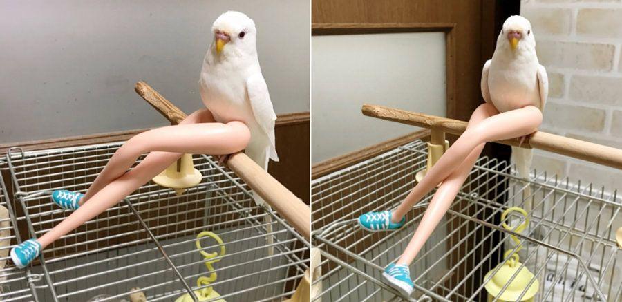 This bird perch