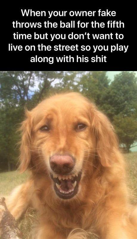 Depressed doggo