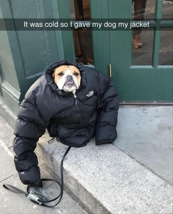 What a sweet dog owner! haha