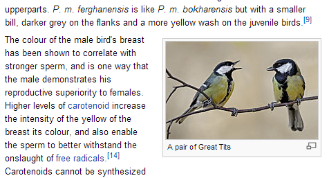 Bird Identification Henfield Birdwatch