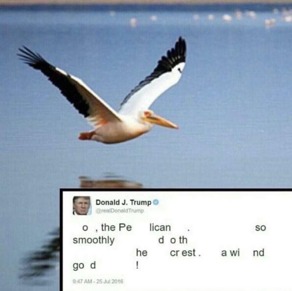 o, the pelican