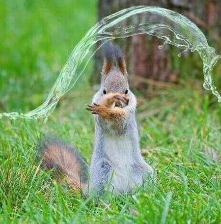 Squirrel has mastered water bending