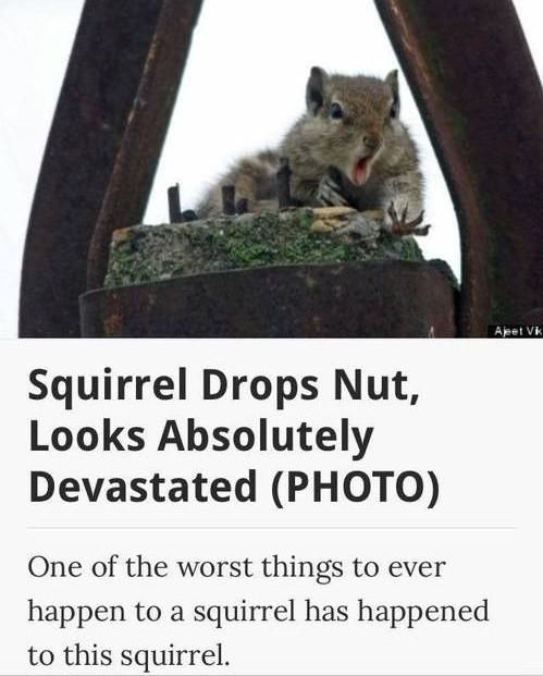 The worst thing that can happen to a squirrel