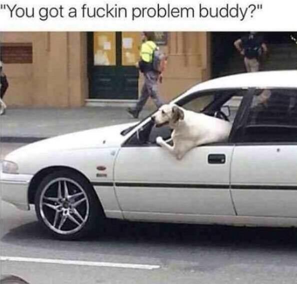 Intense Road Doge