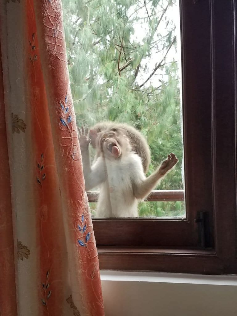 My mom said that a monkey was sitting outside her window and kept licking it. I found it hard to believe. She then sent me this gem.
