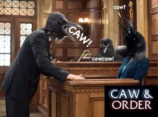 caw caw caw!