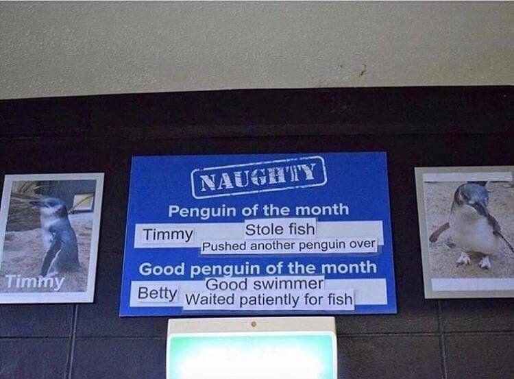 No Timmy, bad Timmy