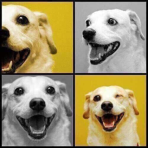 wholesome doggo...