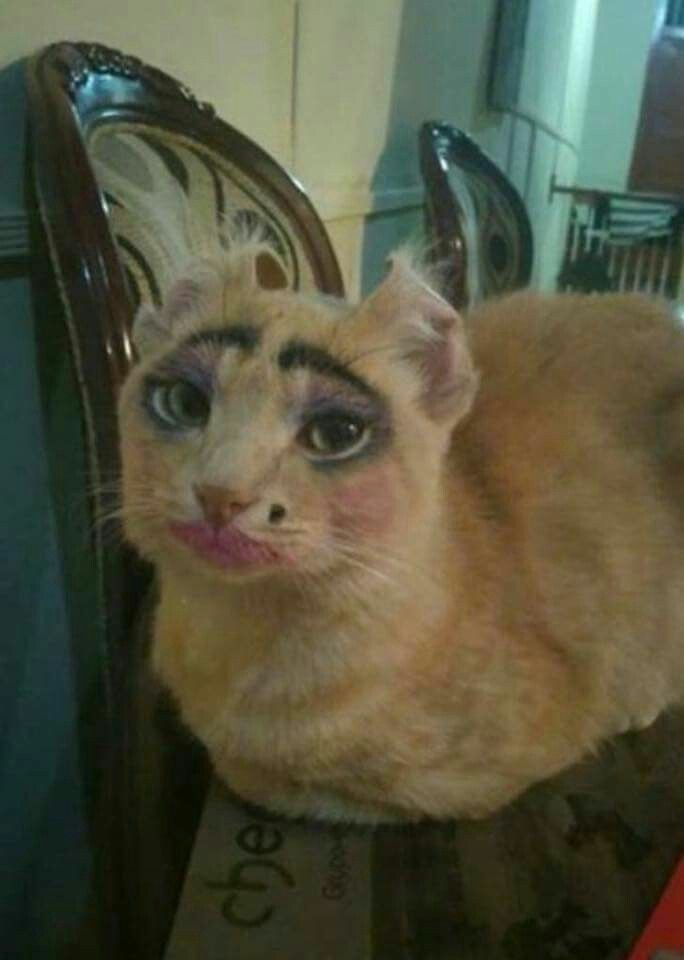 That's what happens if you leaving a young girl with a cat.