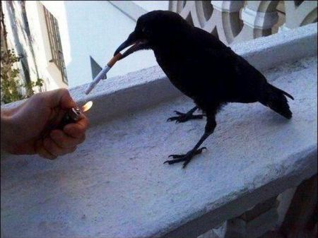 Edgar Allen Poe? I haven't heard that name in years.