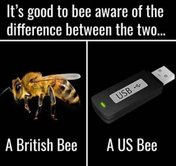 British Bee vs U.S Bee