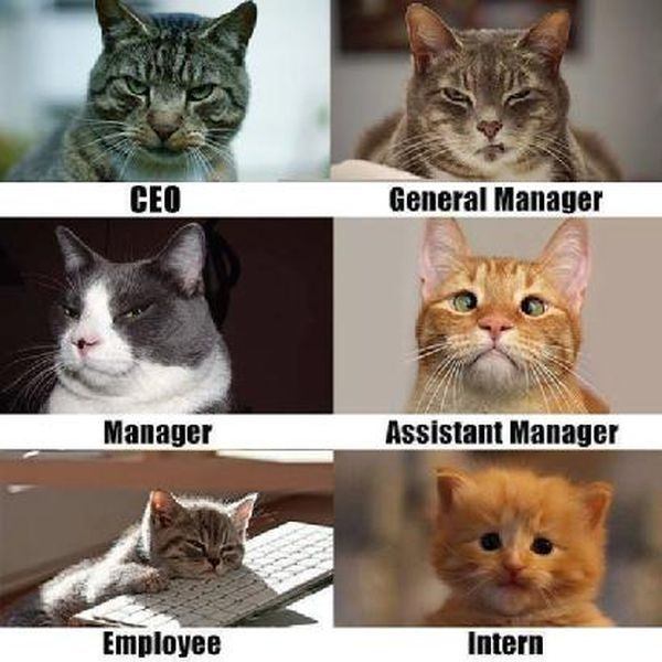 Corporate Cats