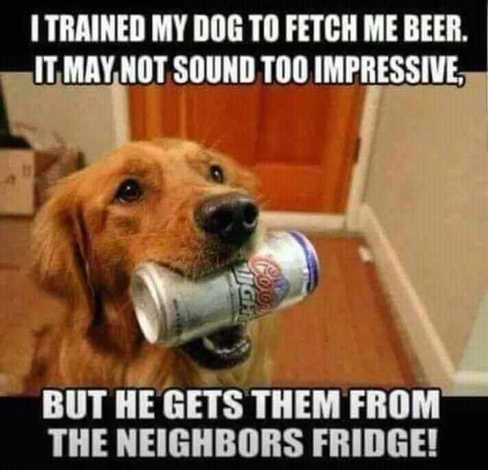 My dogs have some learning to do. Hehe