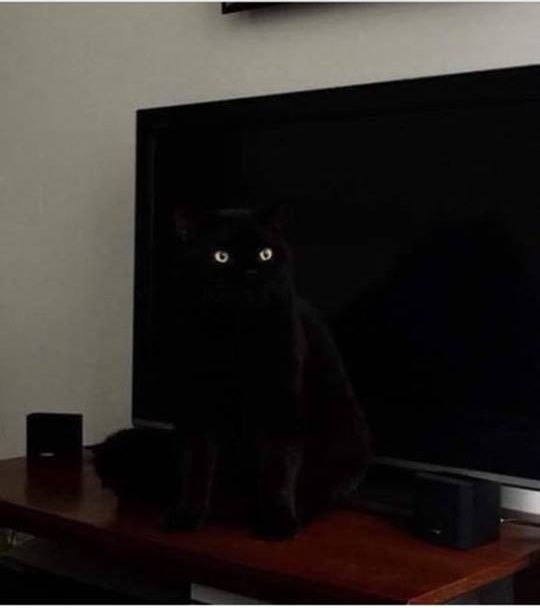 The TV has EYES!