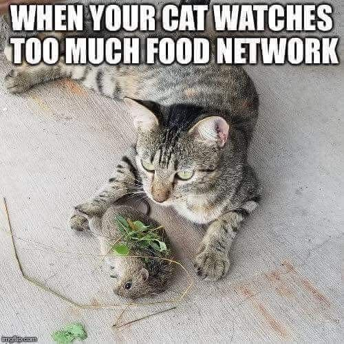 Cats these days ...