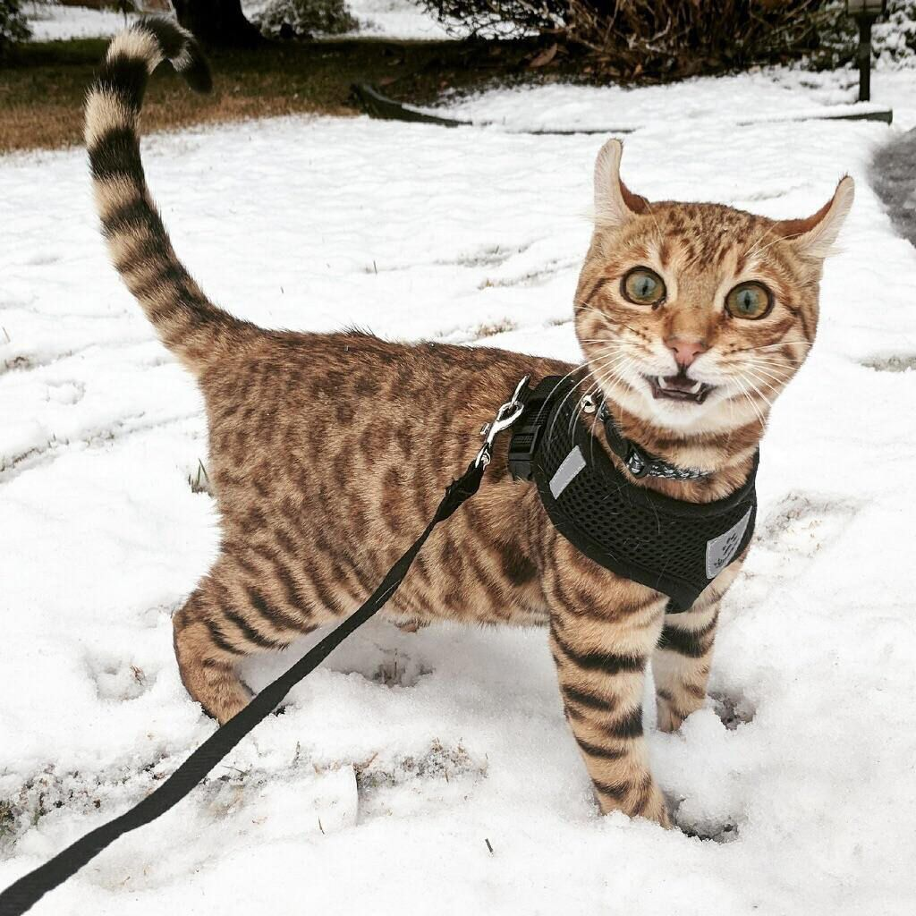 A cat seeing snow for the first time