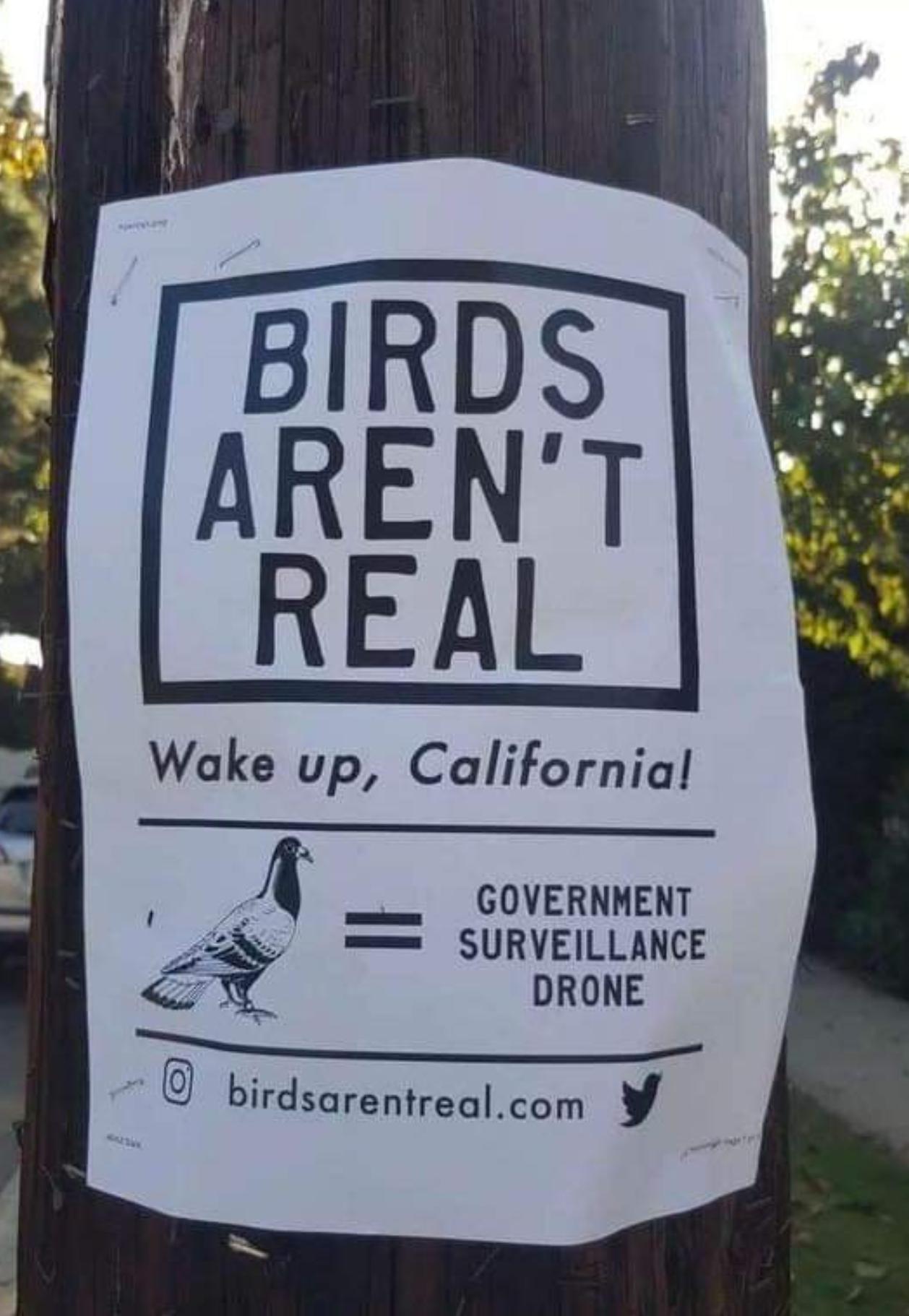 Birds Aren't Real