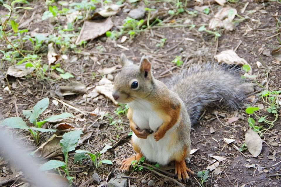 When a squirrel got better cleavage than you