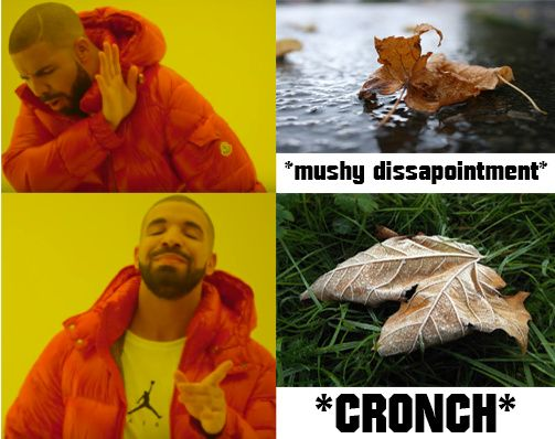 Autumn cereal
